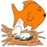 Do goldfish lay eggs?