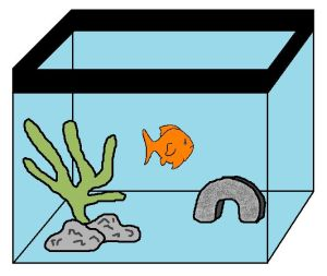 Do goldfish get lonely?