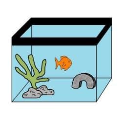 Big goldfish in tank