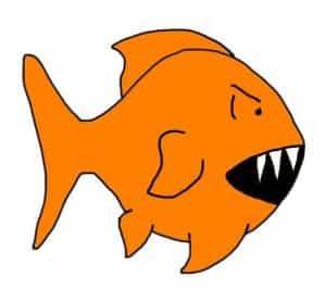 Do goldfish have teeth?