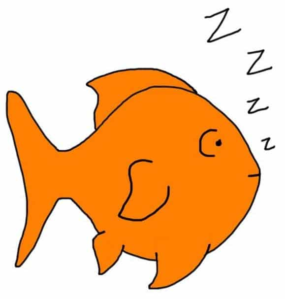 Do Goldfish Sleep? How, when and how can you tell?