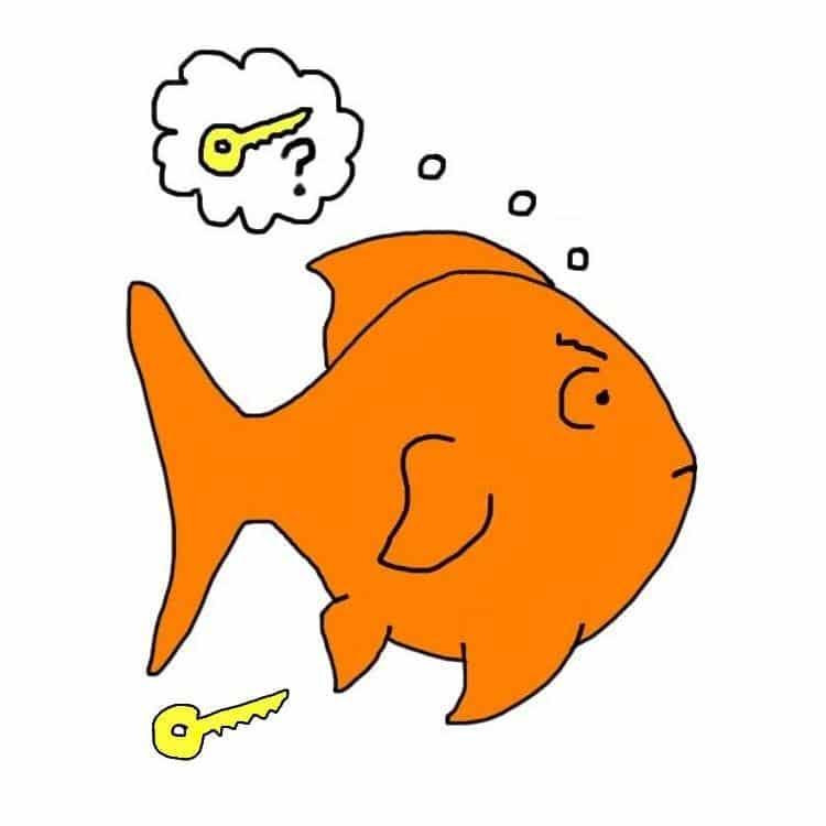 Goldfish Memory: Is 3 second goldfish memory a myth?