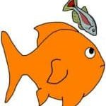 Minnows are a fish that can live with goldfish