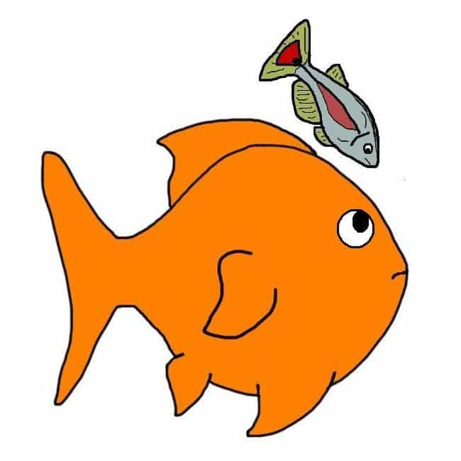 Keeping other fish with goldfish