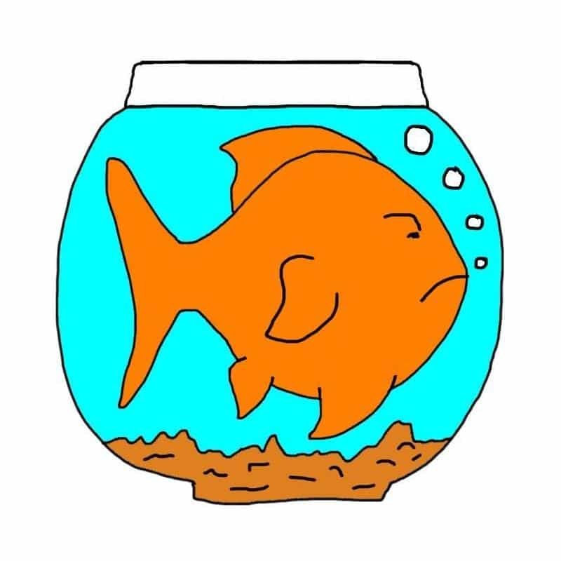 12 Mistakes New Goldfish Keepers Make