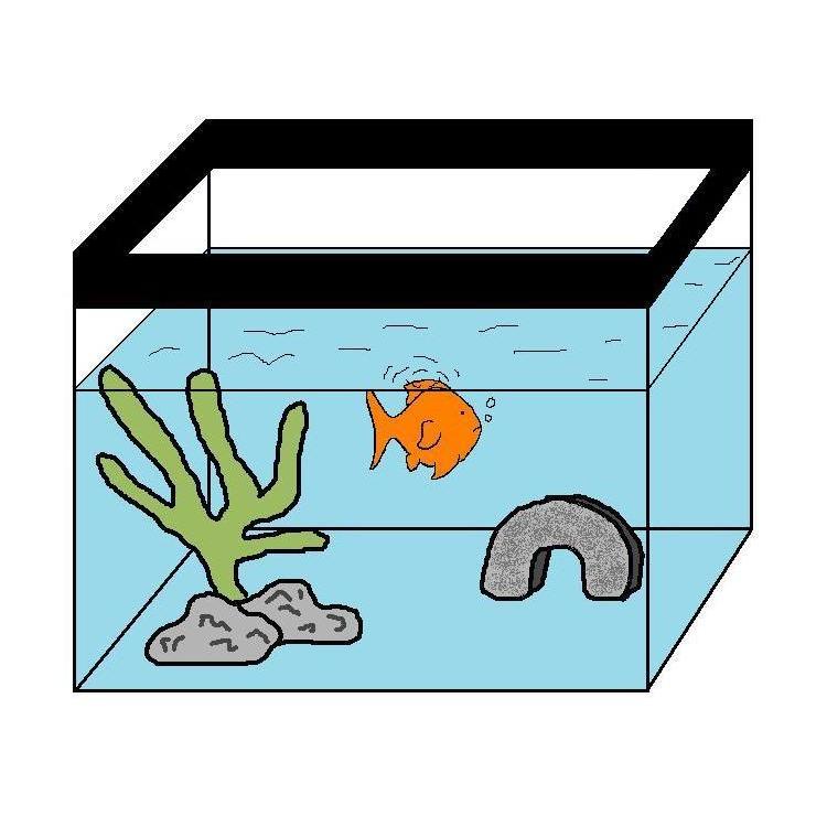 Goldfish tank water change