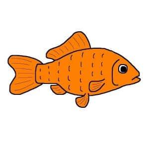Types of goldfish: Common goldfish