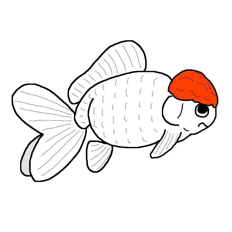 oranda-goldfish