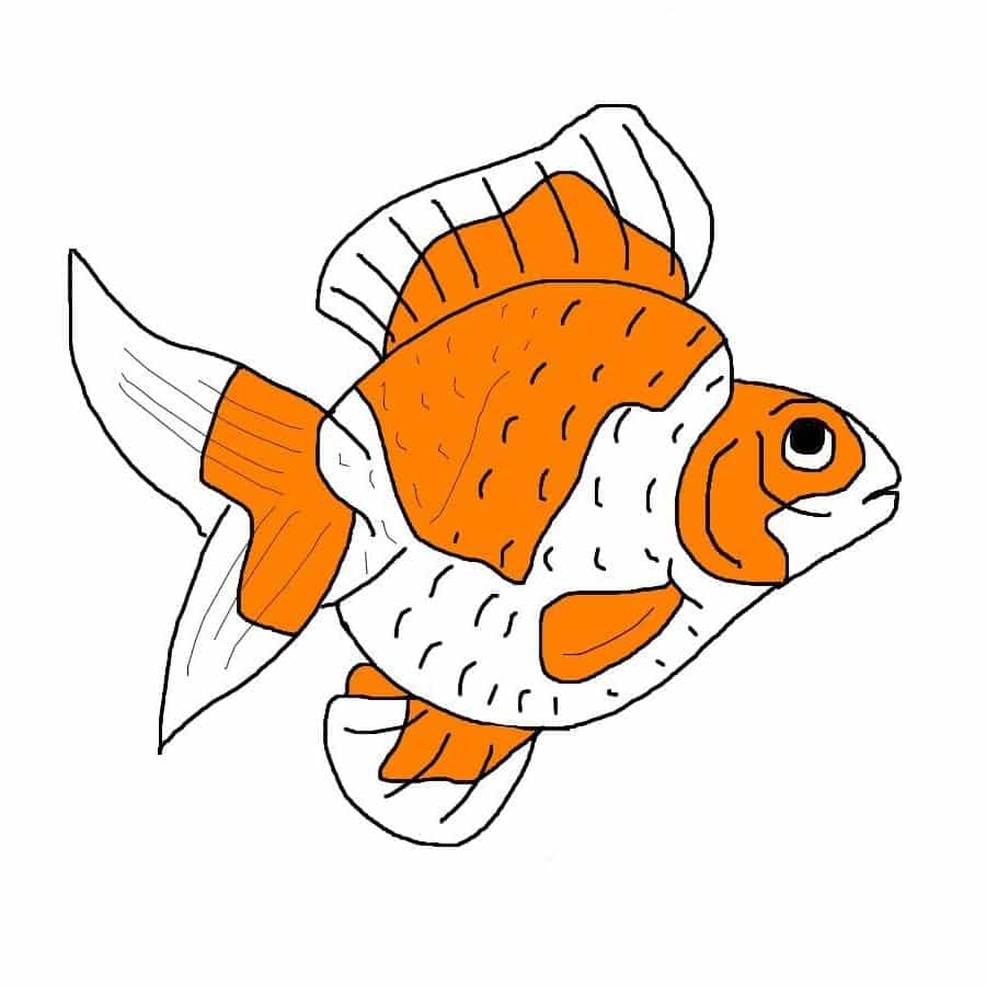 Ryukin Goldfish The Goldfish Tank