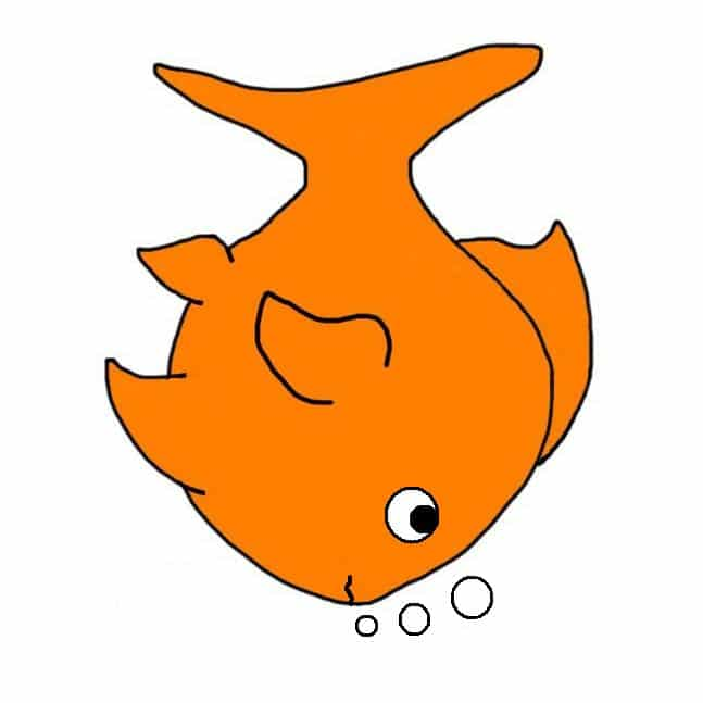 swim bladder disease in goldfish