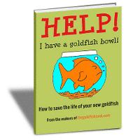 Help I have a goldfish bowl