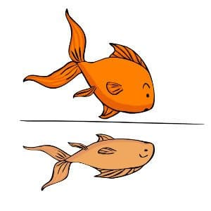 Bare bottomed goldfish tank