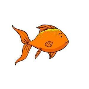 Goldfish and velvet