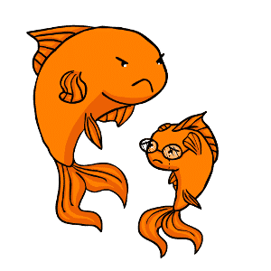 aggressive goldfish