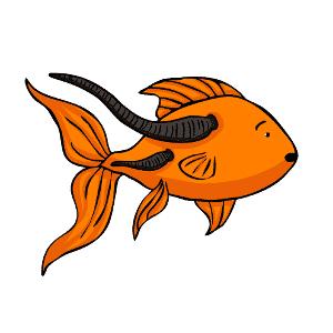 Leeches on a goldfish