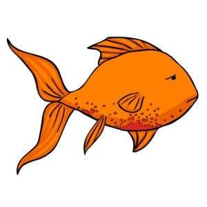 goldfish and costia