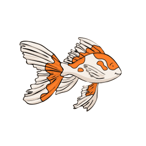 Veiltail Goldfish: All about veiltails