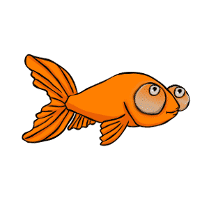 Celestial eye goldfish: All about celestial goldfish