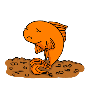 Goldfish not swimming