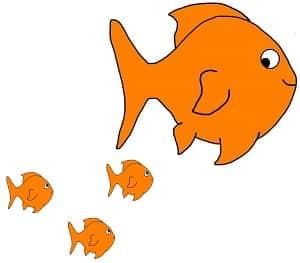 Baby Goldfish: How to take care of goldfish babies